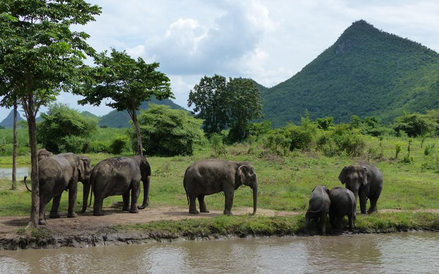 elefant-world-kamchanaburi
