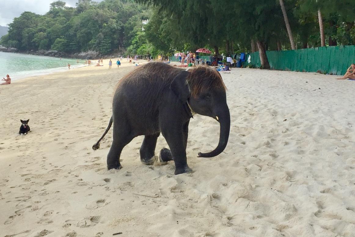 elefantenreiten-in-thailand-tipps